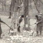 Údržba parku 1932