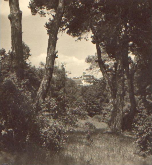 Pohle z parku